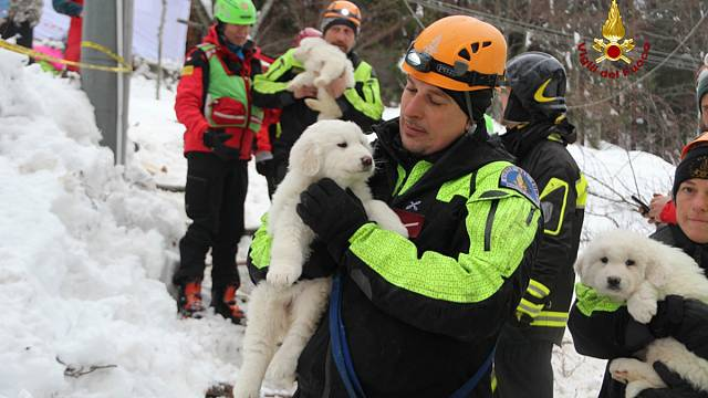 3 puppies found in Hotel Rigopiano- giving hope to rescue workers