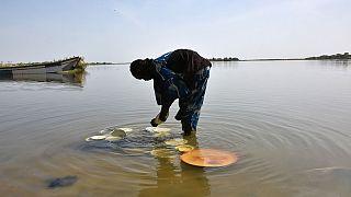 La France promet une aide d'un million d'euros pour sauvegarder l'écosystème du lac Tchad