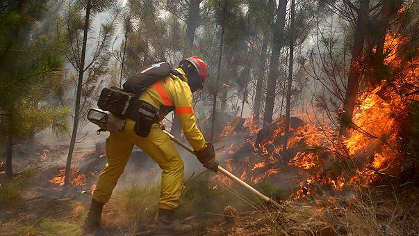Şili tarihinin en büyük orman yangınıyla boğuşuyor