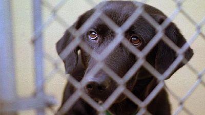 Le chien responsable de la mort d'un fils d'Adama Barrow euthanasié