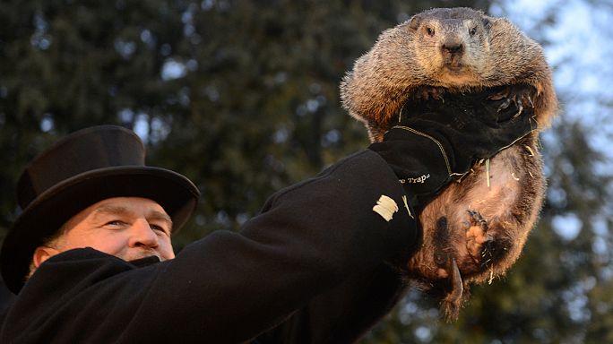 Le 2 février, une marmotte fait la pluie et le beau temps aux Etats-Unis