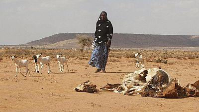Somalia: U.N. issues famine alert