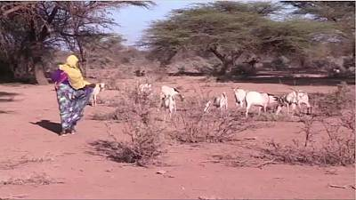 Somalie: cinq millions de personnes menacées de famine en 2017