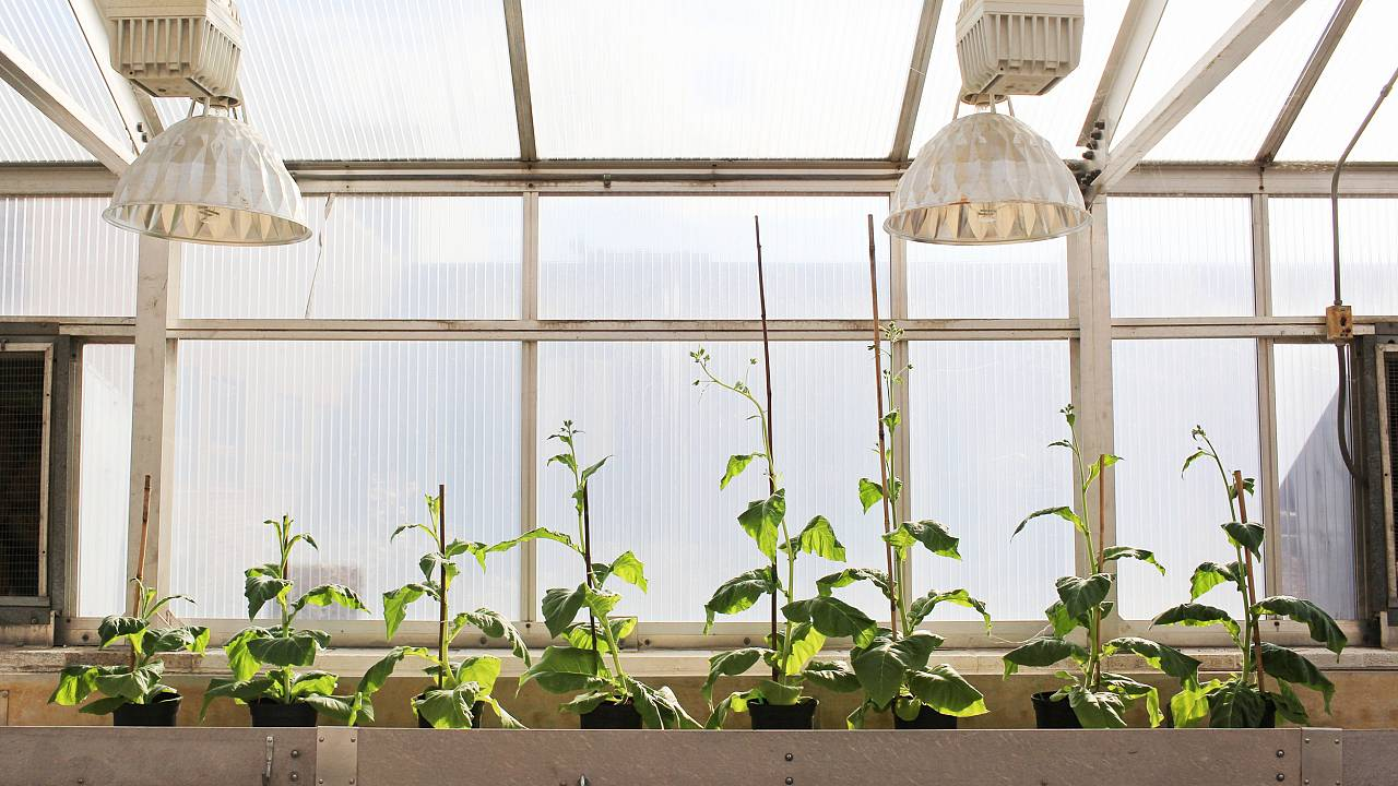 Plant scientists have found a way to 'hack' photosynthesis. Here's why that's a big deal.