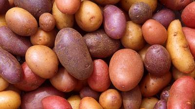 Ghana: la patate douce améliore l'économie générale dans le nord