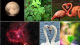 L'amour autour de nous : dix coeurs au naturel