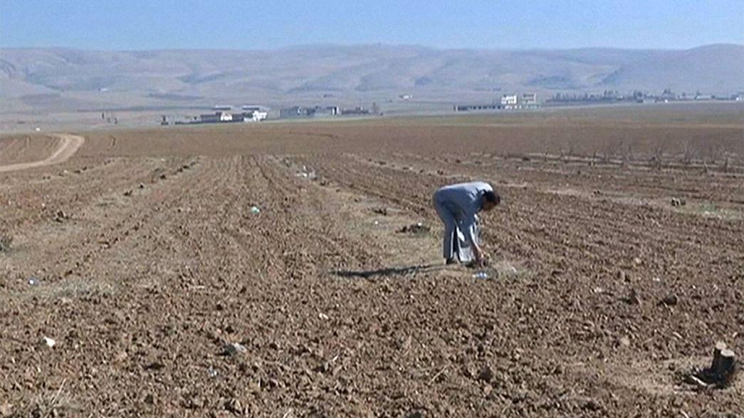 El granero de trigo de Irak saqueado por Dáesh