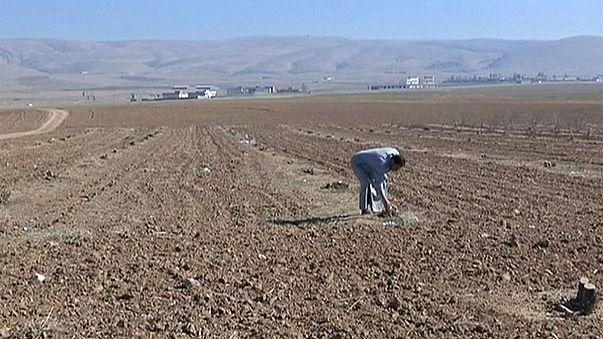 O Daesh destruiu a agricultura do Iraque e deixou os terrenos minados
