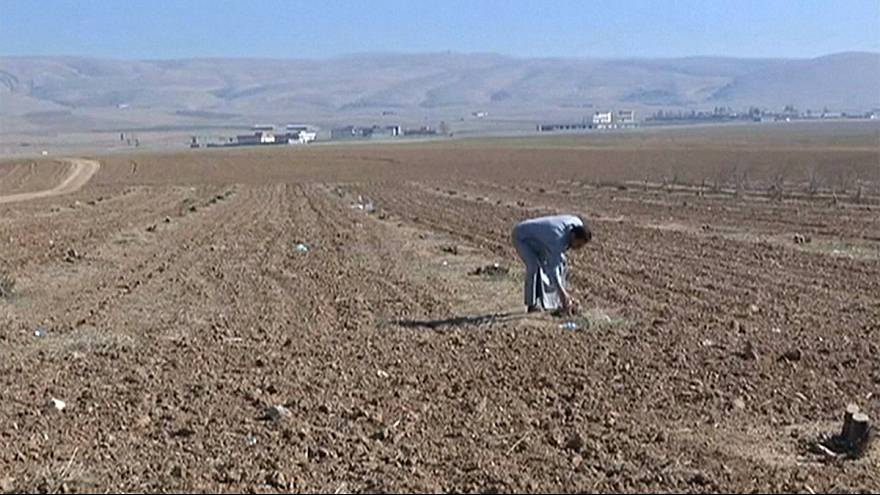Iraqi agriculture in ruins as ISIL leaves trail of destruction