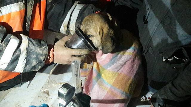 Robotic arm used to save puppy from well