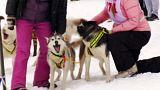 مسابقه با سگهای سورتمه ران در سیبری