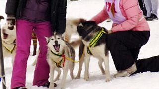 Mamay Kar Yarışı