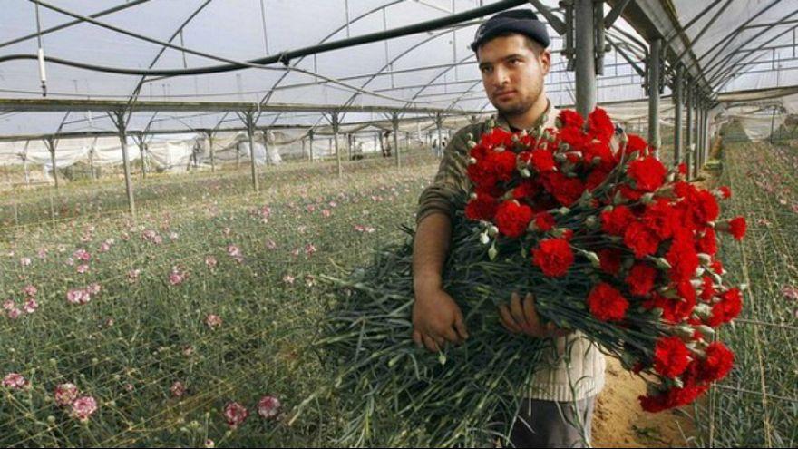 حاصروا غزة فذبلت ورودها