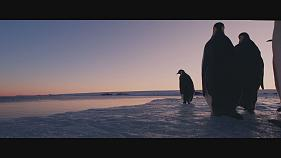 Award winning filmmaker Luc Jacquet films a new chapter in emperor penguin's life