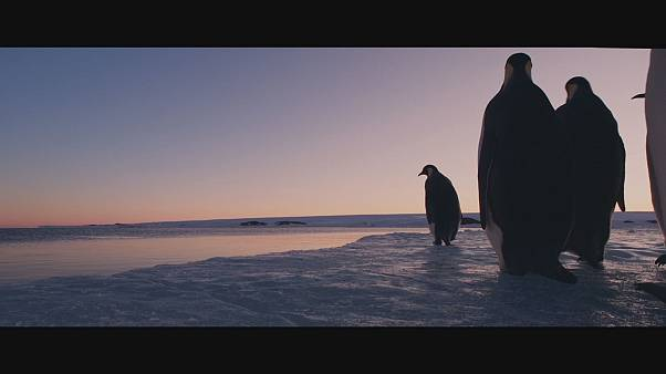 Award winning filmmaker Luc Jacquet films a new chapter in the life of the emperor penguin