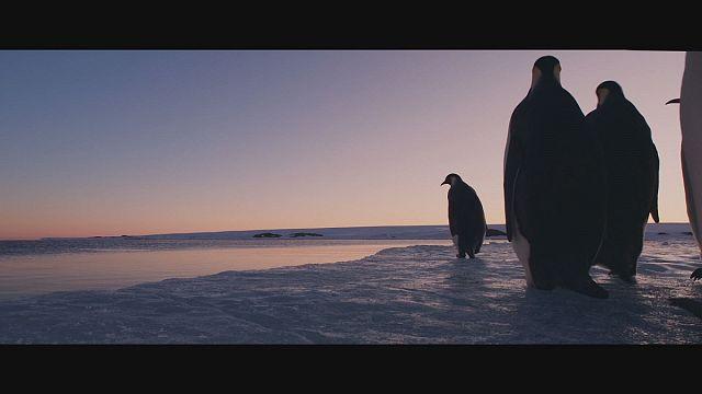 """Realizador de """"A Marcha dos Pinguins"""" volta à Antártida com uma câmara 4K"""