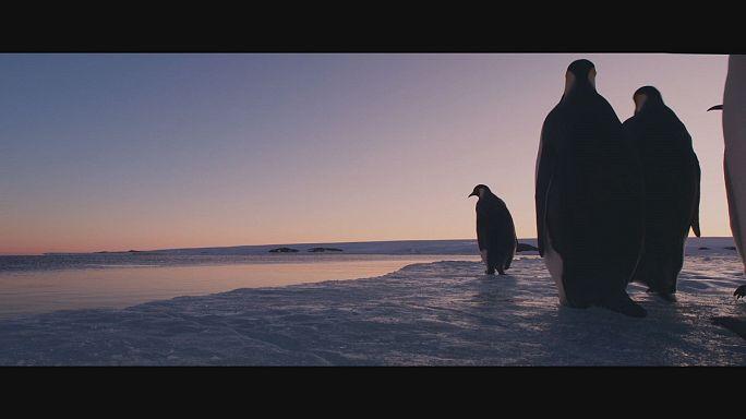 Jeges víz, meleg szív - Pingvinek vándorlása 2