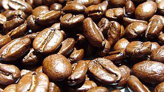 Cameroun: boom de la transformation de café