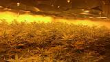 Cannabis farm found in disused nuclear bunker