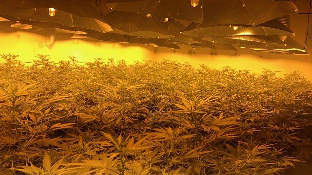 Cannabis farm found in disused nuclear bunker