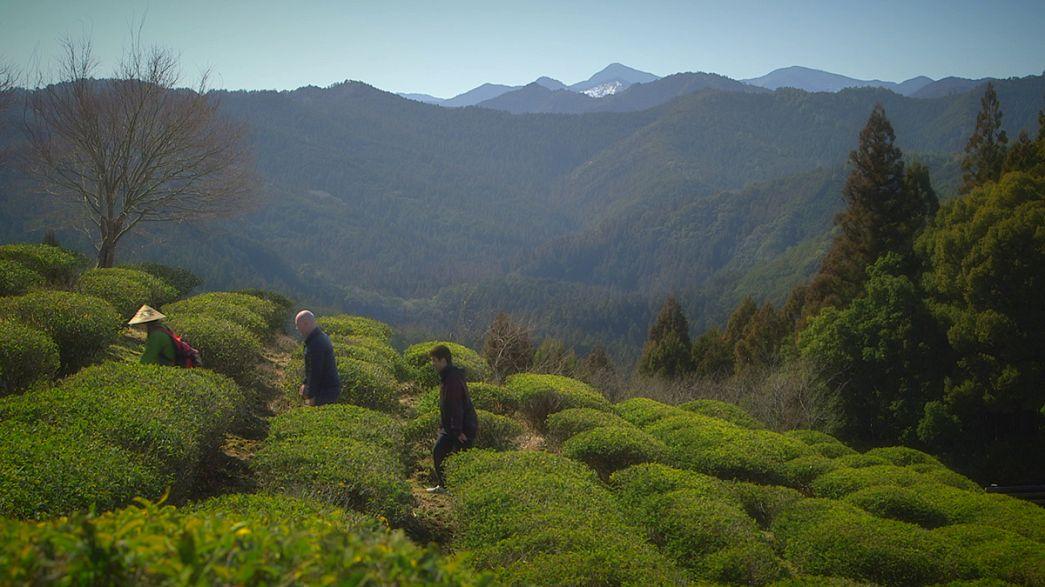 Kansai'nin antik hac yolu ve eşsiz manzarası