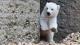 Premiers pas en extérieur pour cet ourson polaire