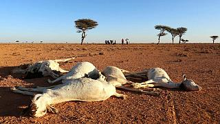 Somalia's President declares drought 'a national disaster'