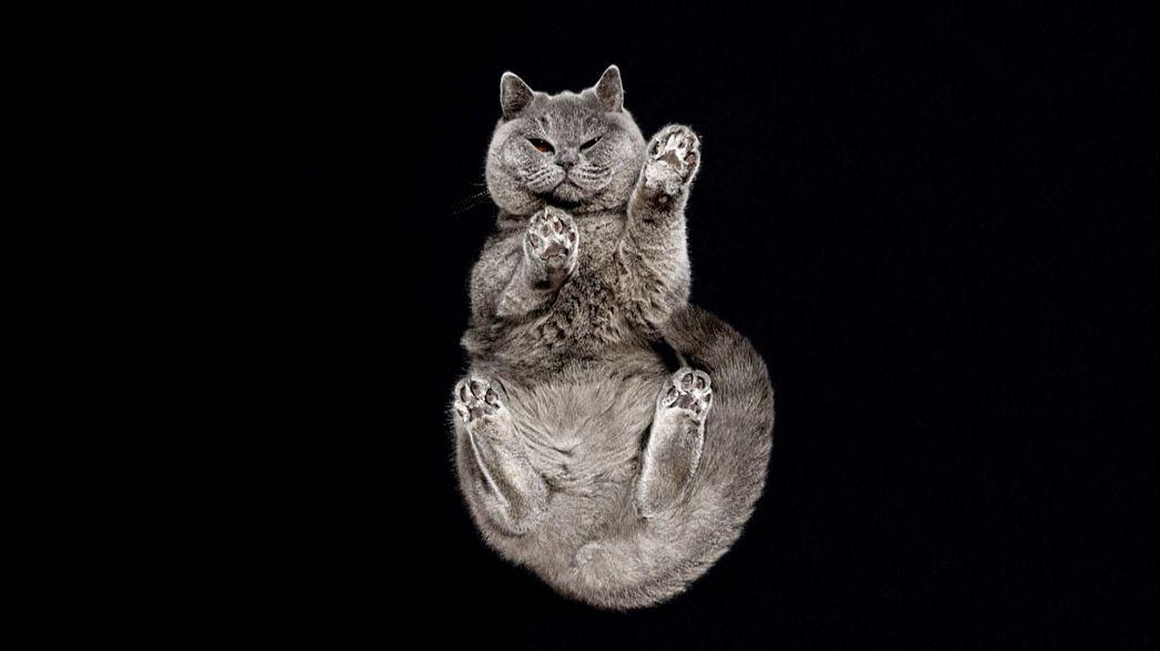 Unser Kulturtipp: Theater, Kunst und Katzenpfoten