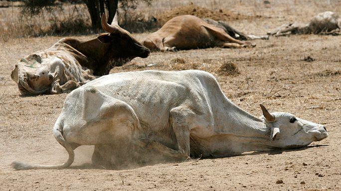 """ONU alerta para risco de """"catástrofe"""" na seca do Quénia"""