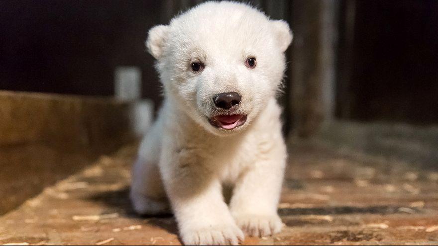 Fritz, o ursinho que emocionou a Alemanha