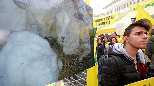 Állatokkal a bürokrácia ellen