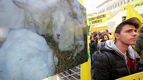 Μαντρί με πρόβατα στο κέντρο της Ρώμης