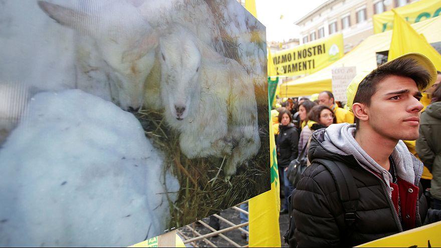 Protesta de agricultores y ganaderos de las zonas afectadas por los terremotos en Italia