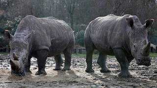 Poachers kill rhino in French zoo