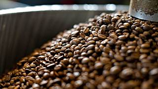 Kenya to double coffee shipment to the U.S