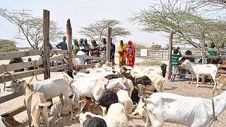 Kenya: Government sets aside about $1.5m to mitigate drought effects in schools