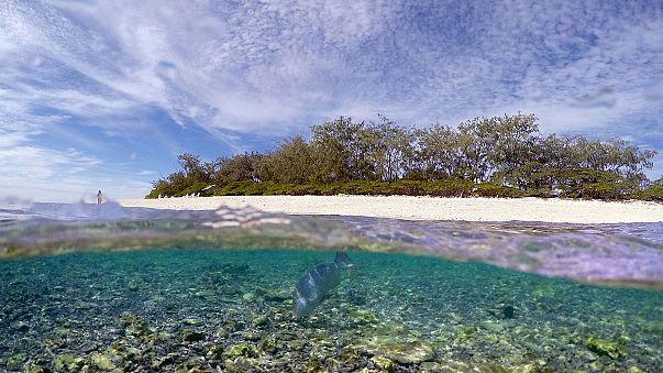 Greenpeace denuncia lo sbiancamento della Grande Barriera Corallina
