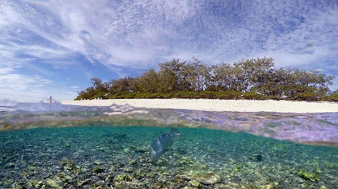 Súlyos korallfehéredés a Nagy-korallzátonyon