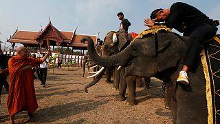 Ünnepi elefántlakoma Thaiföldön