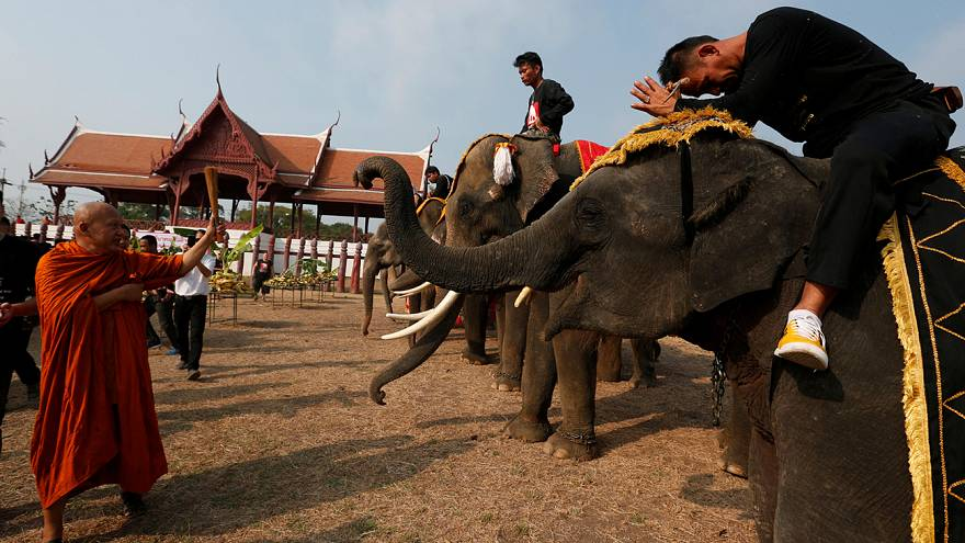 La Giornata dell'Elefante celebrata in Thailandia