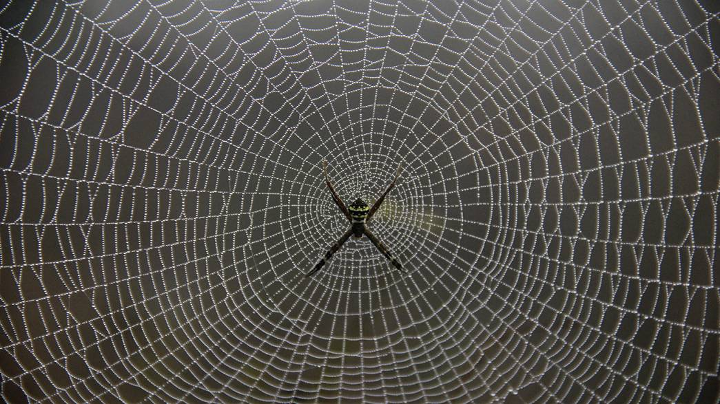Spiders devour over 400 million metric tons of prey yearly - study