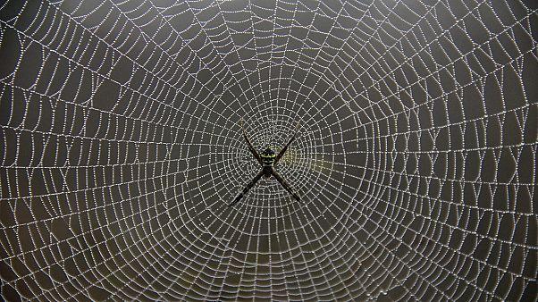 """Οι αράχνες τρώνε περισσότερο """"κρέας"""" από ό,τι o άνθρωπος"""