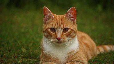 Dubaï: après avoir donné un chat en pâture à des chiens, trois hommes sont condamnés à nettoyer un zoo