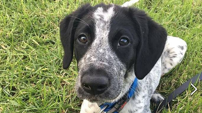 Runaway sniffer dog shot dead at New Zealand airport