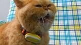 Pet fitness trackers are gaining rapid popularity