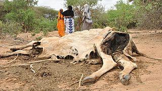 Au moins dix morts dans des combats entre éleveurs au Kenya
