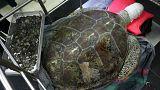 لاک پشتی در تایلند به دلیل خوردن ۹۱۵ سکه جان داد