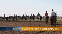 South Africa's horse exports [The Morning Call]