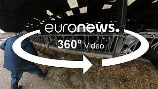 Elecciones en Francia: Las expectativas de un granjero bretón