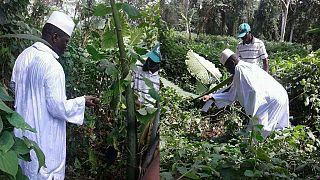 [Photos] Découvrez Yahya Jammeh dans sa ferme en Guinée équatoriale